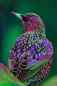 Bird from Heaven?