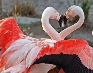 dance-of-love-5