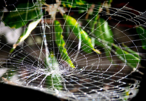 spider-web-gravity-well